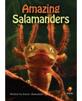 Amazing Salamanders