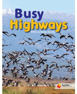 Busy Highways